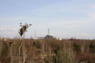 Европейские птицы зимуют в чернобыльской зоне