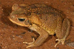 Гольф з отруйними жабами