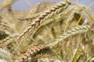 Зерно залишимо собі