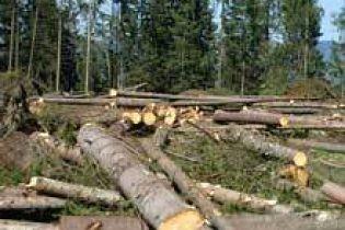 Власть Прикарпатья не считает вырубку лесов проблемой