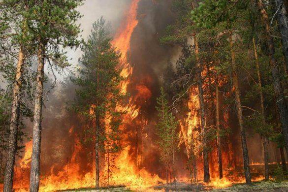 Лісова пожежа
