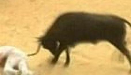 Перегони биків