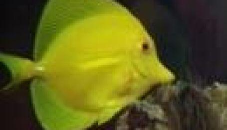Як правильно обрати акваріум?