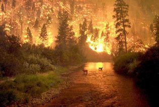 Украину предупредили о пожарной опасности