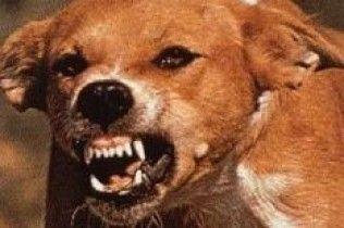 На Сицилії собаки загризли дитину