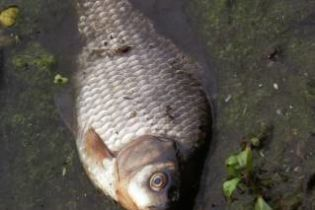 Массовая гибель рыбы в Одесской области (видео)
