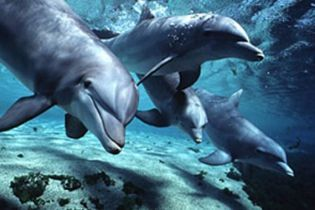 В Украине запретили ловить дельфинов