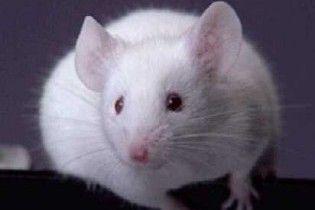 У Рівному у пиві знайшли мишу (відео)