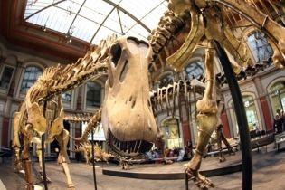 """У Китаї знайшли """"цвинтар"""" динозаврів"""
