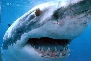 У Єгипті акула з'їла аквалангіста