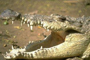 Крокодил заблокировал дорогу к Новому Орлеану
