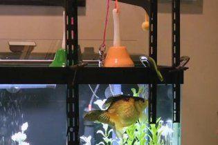 У США акваріумна рибка навчилася грати на музичних інструментах
