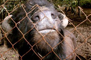 В Киевском зоопарке неизвестные отравили очередное животное