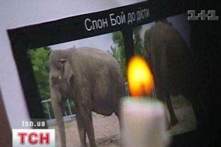 Міліція заявила, що тварин у Київському зоопарку ніхто не труїв