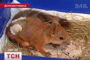 В Днепропетровске прохожие спасли белку со сломанным позвоночником