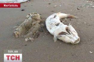 В Мариуполе массово гибнут рыбы и птицы