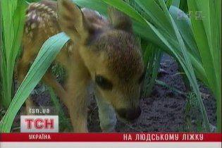 На Чернігівщині лікарі врятували життя косулі