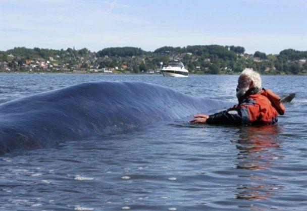 У данському фьорді застряг 30-тонний кит