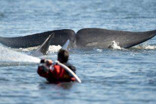 В датском фьорде застрял 30-тонный кит