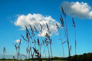 Погода в Украине на субботу, 4 сентября