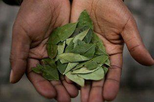 Боливия отменила ограничение на продажу коки