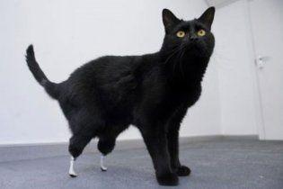 В США прячут черных кошек: в Halloween на них охотятся сатанисты