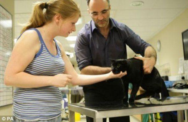 Британские врачи пересадили коту железные лапы