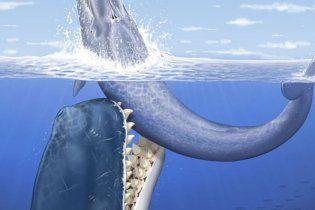 Ученые нашли крупнейшего морского хищника: кашалот размером с автобус охотился на китов