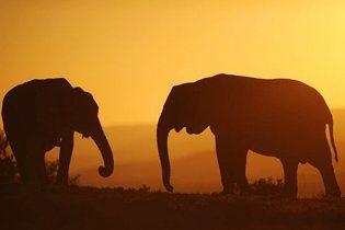 В Индии стадо диких слонов снесло село