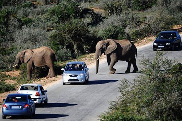 Национальный парк слонов Эддо в Южной Африке