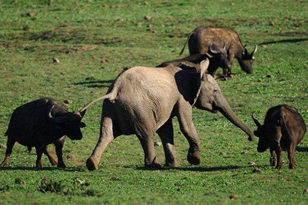 Національний парк слонів Еддо у Південній Африці