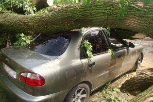 На Харківщині дерево впало на авто: загинули двоє людей