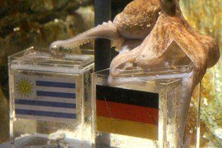 Восьминіг-оракул ЧС-2010 виявився самкою