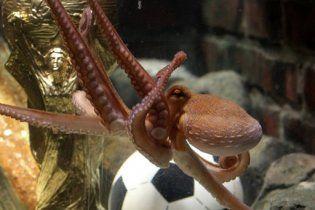 Испанцы назовут своих детей в честь осьминога-оракула