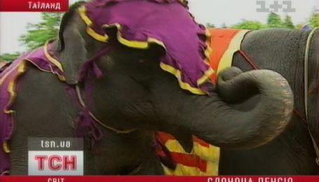 Слони теж ідуть на пенсію