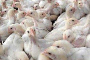 Росія зняла обмеження на ввезення м'яса птиці з України