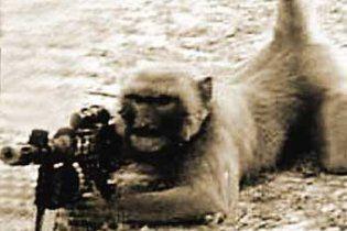 Талибы учат обезьян стрелять из автоматов по американским военным