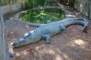 Пьяный турист пробрался в зоопарк, чтобы покататься на крокодиле