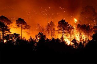 Дети сожгли заповедник, чтобы посмотреть на работу пожарных