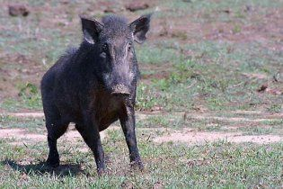 На Одесщине браконьеры добивают животных, спасающихся от наводнения