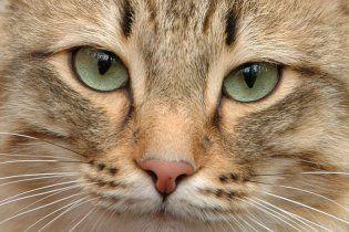 Отец зарезал сына, который не дал убить кошку