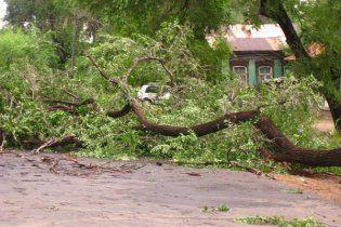 На Киевщине в результате падения деревьев из-за непогоды погиб человек