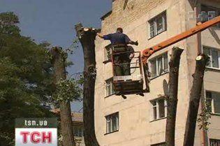 На Вінниччині на дитячий майданчик впало дерево: госпіталізовано 5 дітей і вчительку
