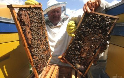 Пчеловоды бьют тревогу: из-за обработки химикатами полей гибнут пчелы