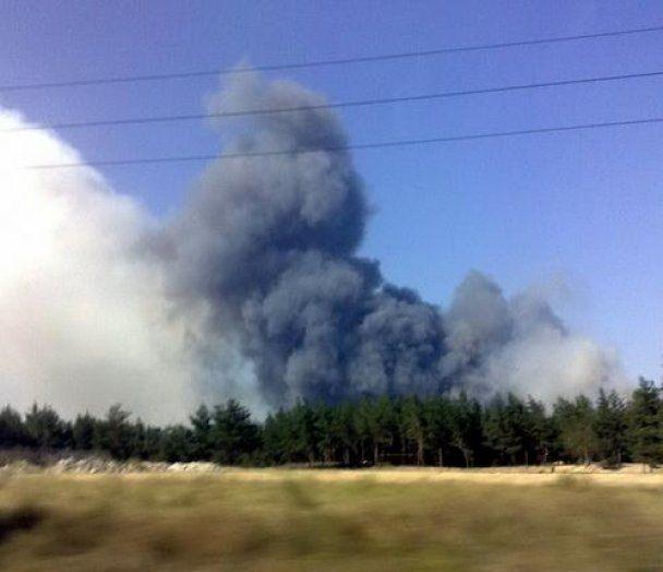 Лесной пожар в Луганской области, длившийся более суток, локализован