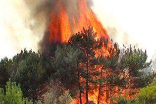 На Київщині згоріли 4 гектара лісу