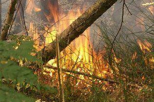 На Дніпропетровщині пожежа знищила 300 га військового лісництва
