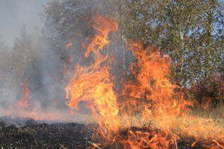 Гослесхоз: в Киеве горят торфяники и свалки