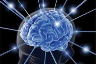 Мозок ссавців виявився побудований за принципом Інтернету