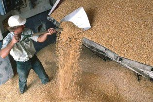 Зернотрейдеры практически прекратили закупки зерна у крестьян